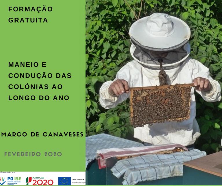 apicultura_marco
